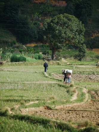 One man and three women carrying stuff around the fields
